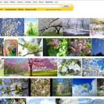 «Яндекс» объяснил «цензуру» в картинках техническим сбоем