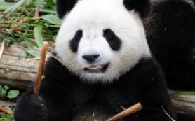 Google подтвердил апдейт алгоритма Panda до версии 3.6