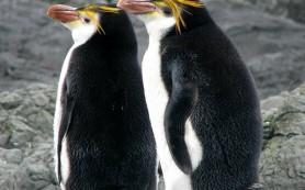 Пингвин дружит с хорошим контентом и экспертами