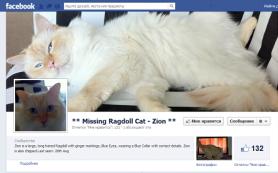 Реклама в Facebook помогла хозяину найти потерявшегося кота