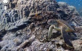 Google добавляет в сервис Street View панорамы коралловых рифов
