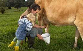 Комфортное доение коров без лишних затрат