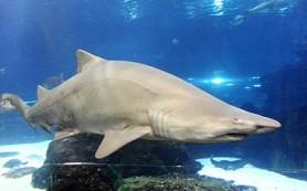 Google защитит подводные кабели от акул