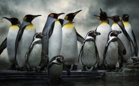 Google поделился деталями обновления Penguin 3.0