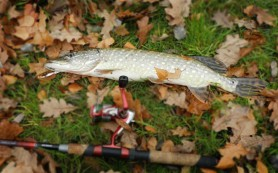Особенности рыбалки с помощью пикера