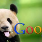 Google напомнил, по какому адресу писать жалобы на Па