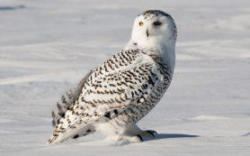 Современные видео ролики на портале falcon.video