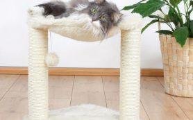 Когтеточка с лежаком для кота своими руками